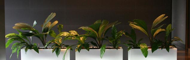 Donice podświetlane pomysłem na oryginalną dekorację wnętrz i ogrodów